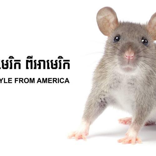 Orkin Cambodia